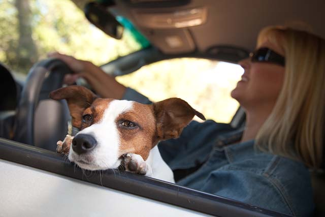 Travel Stress in Dogs and How to Cure It? post thumbnail image